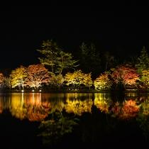 紅葉時期は蓼科湖ではライトアップを楽しめます