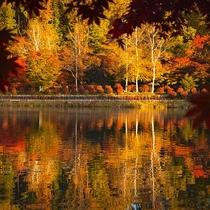 紅葉の蓼科湖