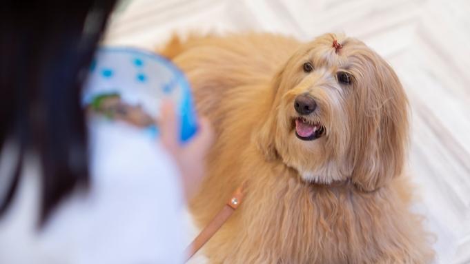 【愛犬用ケーキ付記念日】愛犬との思い出づくりに!お食事も愛犬と一緒◆ワングレードアップ特選フレンチ