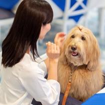 お食事も愛犬と一緒!専用シートをご用意しております。