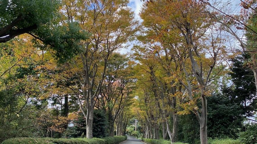 エントランスの欅並木。秋は紅葉で黄色に染まります