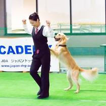 毎月開催♪プロのドッグトレーナーによるドッグダンス体験