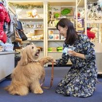 愛犬グッズはプロ監修!豊富な品揃えが自慢です。