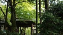 *【瑞宝寺公園】関西でも有名な紅葉の名所です。