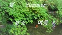 京都橘屋で京都の四季をお楽しみください