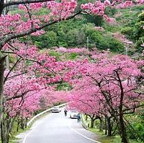 日本早い桜まつり