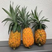 沖縄のフルーツ