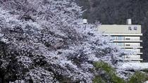 丸峰 外観(春)