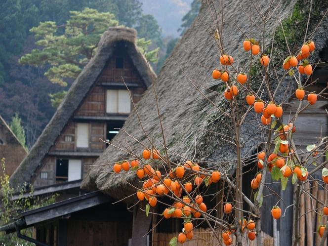 【秋季】柿の木をはじめ実りの秋
