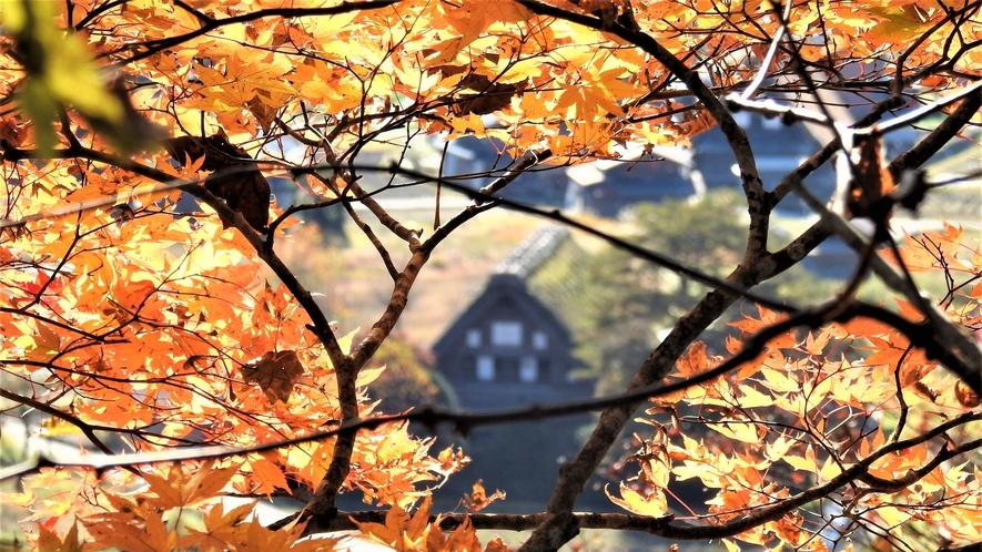 秋季 秋の白川郷展望台からの風景