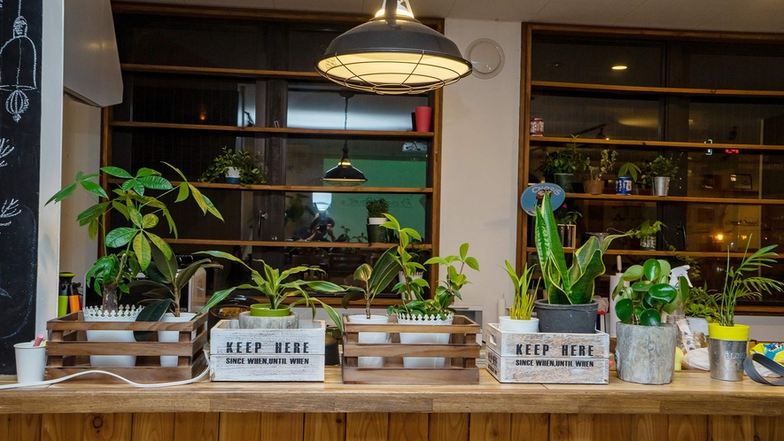 ・自然を感じる観葉植物は施設の随所にあります