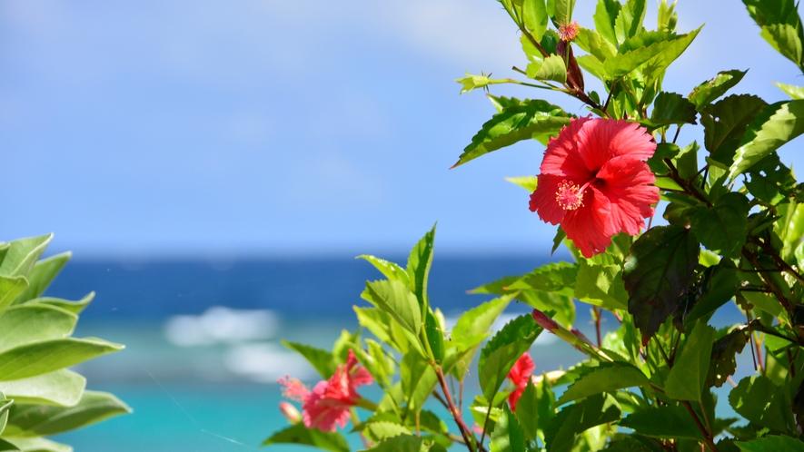 【シギラビーチ(リゾート内)】ハイビスカス 花言葉:常に新しい美・勇敢