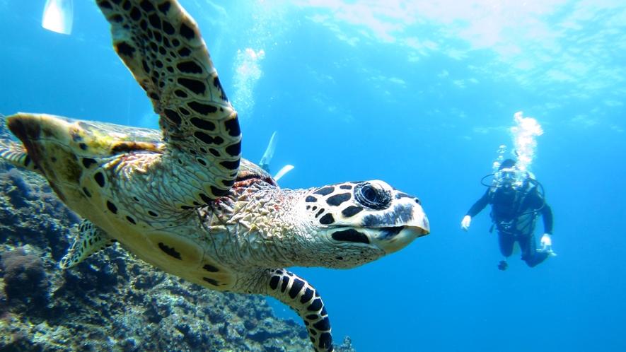 【ウミガメとの遭遇】ダイビングはもちろんシギラビーチで出会えることも。