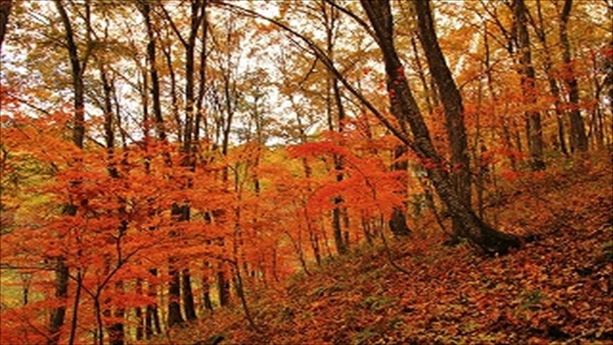 アファンの森 紅葉