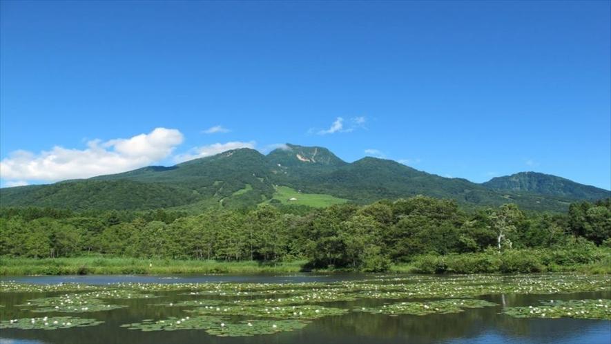 いもり池イメージ 夏