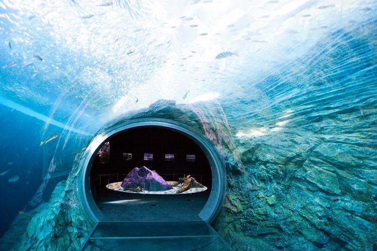 新水族館「うみがたり」(水中を散策しているかのようなうみがたりチューブ)