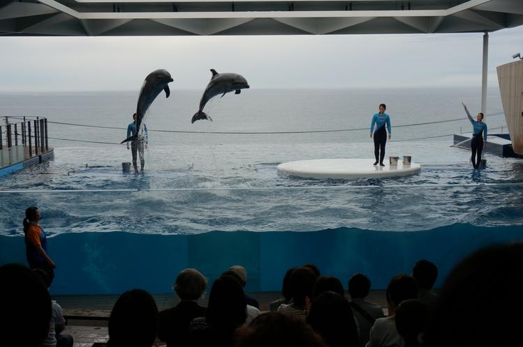 新水族館「うみがたり」(年間通して見ることができるイルカショー)