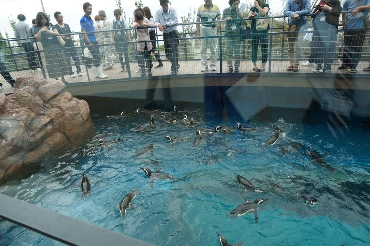 新水族館「うみがたり」(マゼランペンギンミュージアム)
