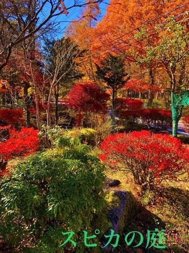スピカの庭