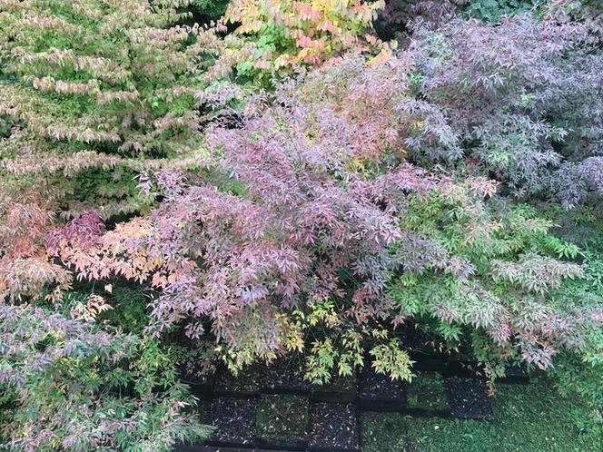 秋の紅葉も(10月25日頃)