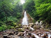 【七滝】自然の迫力を間近で感じることができます。