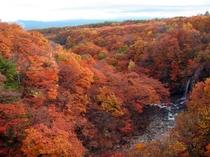 【松川渓谷(秋)】渓谷全体が、目の覚めるような飛び切り鮮やかな紅葉に彩られます。