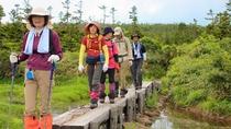 【八幡平頂上トレッキング】八幡平の夏といえばトレッキング!山歩きをお楽しみください。