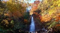 【七滝(秋)】紅や黄金に染まる木々と勢いよく水しぶきを上げる七滝が、見事なコントラスト!