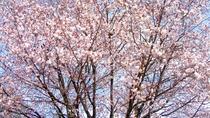 【ホテル(春)】秀峰・岩手山、八幡平の山並みが連なる絶好のロケーションで楽しむ桜は当ホテルならでは