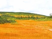 【草紅葉】夏の間、高山植物として彩った草は、色を変え山肌を染めます。