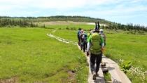 【黒谷地湿原】緑に囲まれた静かな空間で、風の音に耳を澄ませながら歩みを進めます。