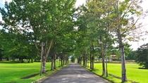 【ホテル並木道】爽やかな緑の道をのんびり散歩しながら心も身体もリフレッシュ。