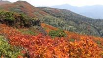 【三ツ石馬蹄縦走】山頂に近づくにつれて色濃く染まってゆく木々を眺めながら、足を進めて行きます。
