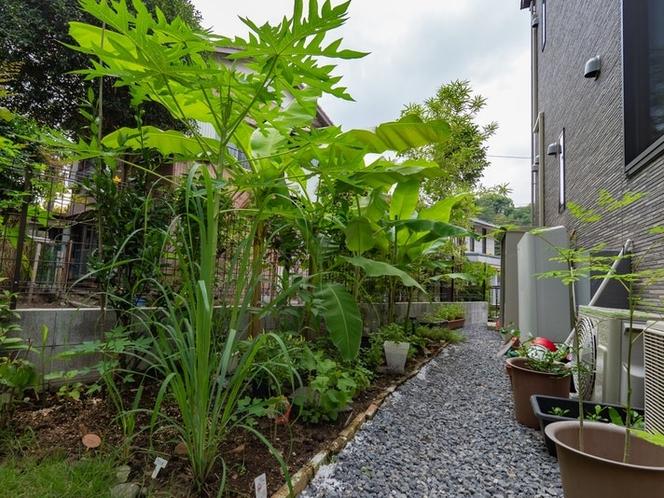 バナナやアジアのハーブも植えてます(Banana Trees & Asian Hurbs...