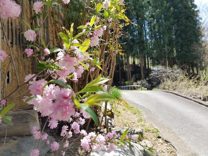 庭の花(春)