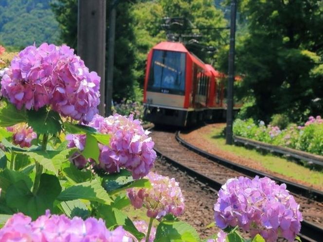 Hydrangea train June -july アジサイ列車6-7月