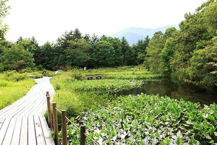 湿生花園 Shissei-Kaen