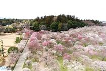 日本遺産・偕楽園(茨城県水戸市)