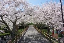 女子旅 館山城 桜シーズン