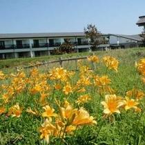 【自然】6月 ホテルの裏側はトビシマカンゾウの見所