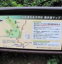 【自然】大佐渡石名天然杉 かんばん