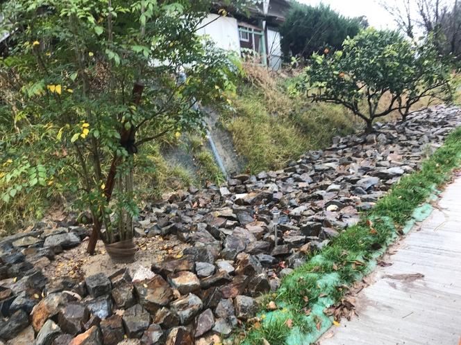 サンセットビレッジ敷地までの坂道のレモンとみかんの木