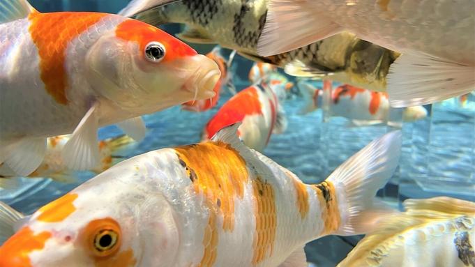 【ひろしまアソビ】宮島水族館♪杜の宿特別クーポン付プラン♪【ポイント2倍】【楽天限定★旅行応援】