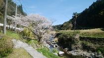 小塩川の桜