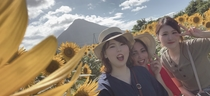 向日葵畑の美女たち