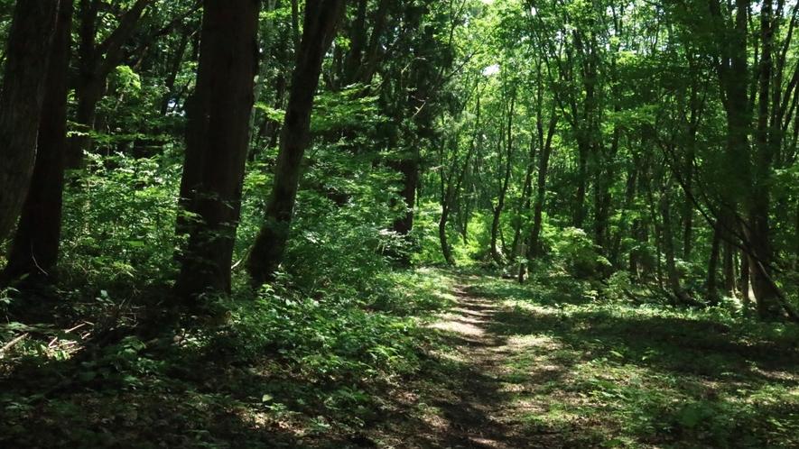 庭から続く森