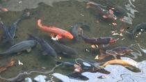 *【庭園】自然の湧き水を使って約千匹の鯉を養殖しています。その泳ぐ様は圧巻ですよ!