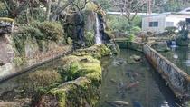 *【庭園】約千匹の鯉が泳ぐ池。自然の湧き水で養殖しています
