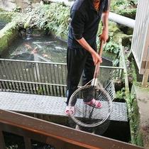 *約千匹の鯉を養殖しており、調理する直前に捌きます