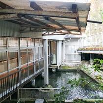 *【鯉が泳ぐ池】約千匹の鯉を湧き水で養殖しています